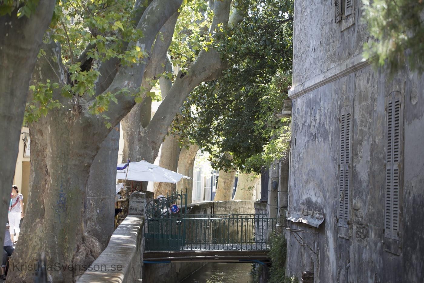 juni 2017 Avignon 6458