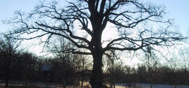 Kära vänner: har ni lust be ert favoritträd om hjälp för min räkning?