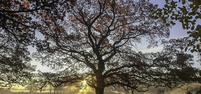Månadens bild: trädet som är vackert som en tavla