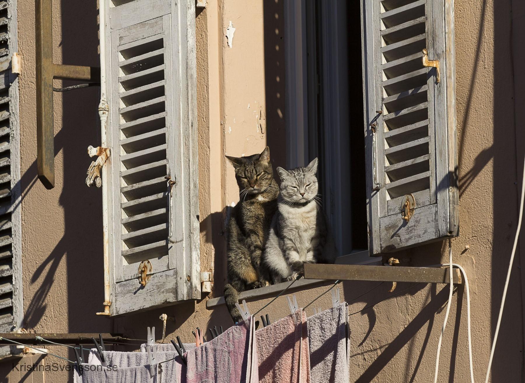 november-2015-katter