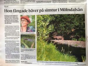 Molndals-Posten-20-juli-2021-x