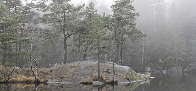 Månadens bild: dimmiga tallar i Mölndal