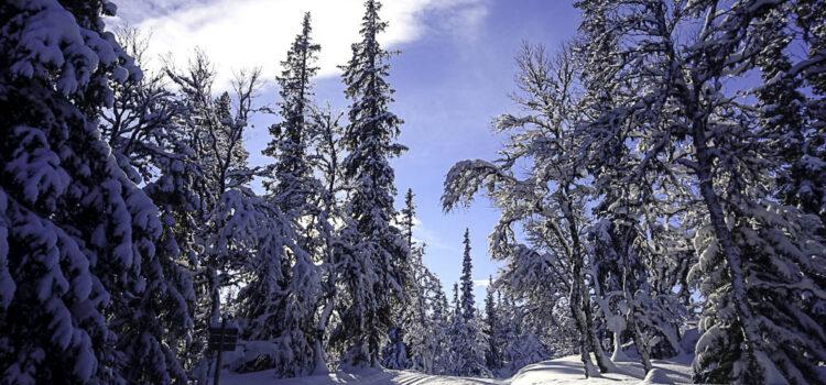 Månadens bild februari 2019: skidspår i Funäsfjällen