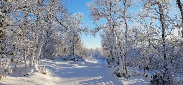 Mars 2021: Perfekta skidspår inramade av vita björkar i Funäsfjällen