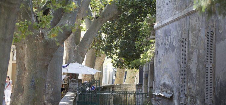 Månadens bild: Avignon