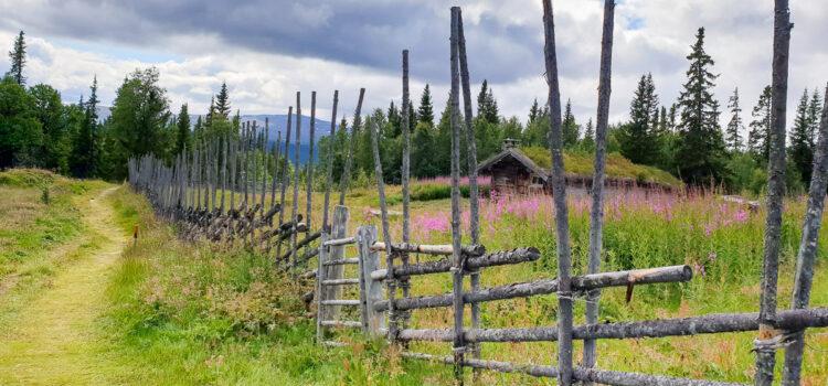 Juli 2021: Gärdsgården runt Ruvallens fäbod i Härjedalsfjällen