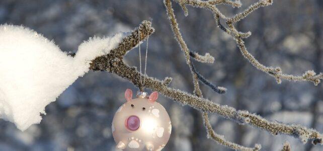 Månadens bild – december 2011