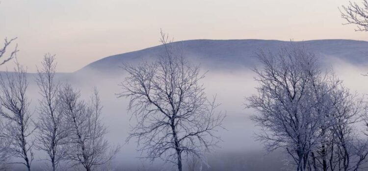 Månadens bild januari 2012