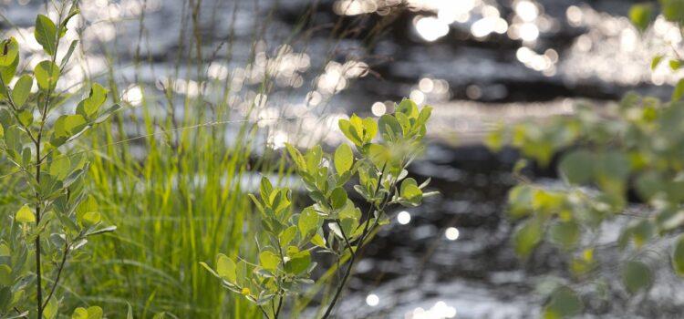 Månadens bild: solglitter i Torestorpsån