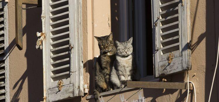 Månadens bild: katter i Cannes